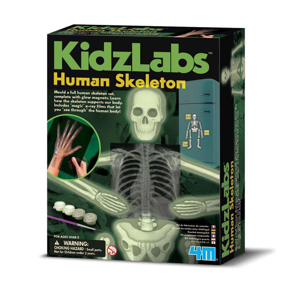 香港4M創意玩具 - 骨頭的奧秘 Glow Human Skeleton