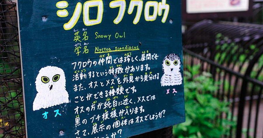 【日本北海道之旅 】Day3 Part1 北海道旭山動物園